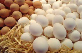 Куриное яйцо стимулирует мозговую деятельность