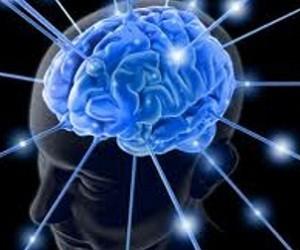 Открыт ген, управляющий старением мозга