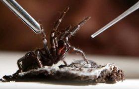 Уникальный яд пауков возвращает к жизни тяжелых инсультников