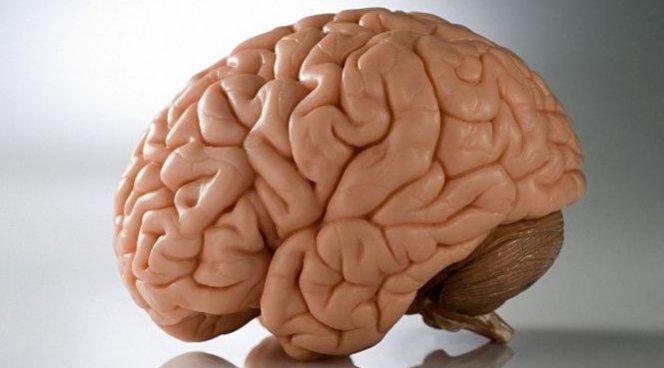 Найдено просто средство для омоложения мозга