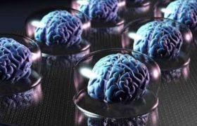 Ученые назвали неожиданные признаки высокого интеллекта
