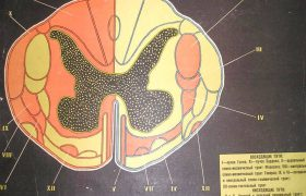 По анализу жидкости спинного мозга будут ставить диагноз болезни Альцгеймера