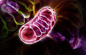 Ученые создают генетическую карту болезни Паркинсона