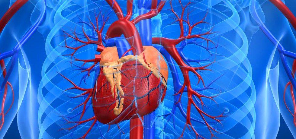 Что провоцирует развитие болезней сердца
