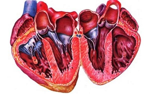 Прокальцитонин и пресепсин в диагностике и прогнозе течения инфекционного эндокардита