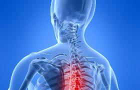 Регенерация спинного мозга стала реальностью