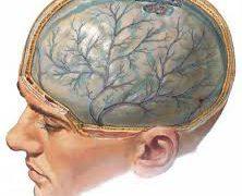 Диффузное аксональное повреждение головного мозга