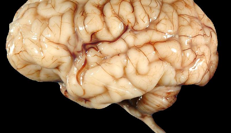 Ученые объяснили физиологическую особенность успешности