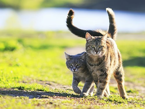 Польза котов для здоровья