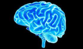 Церебральная мистика: мозг