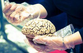 Ученые объяснили, как вода попадает в мозг