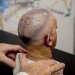 Ученые вырастили мини-мозг неандертальцев