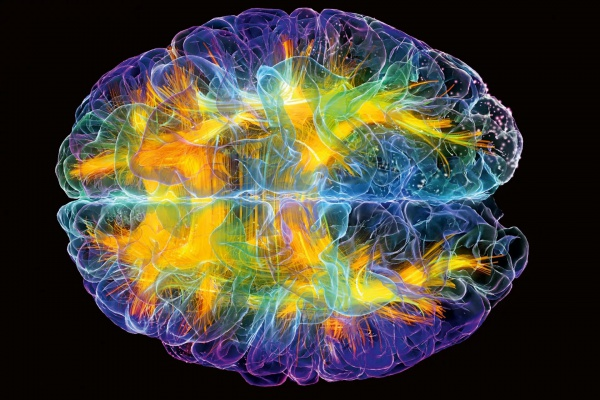 Особая кислота поможет разогнать мозг человека