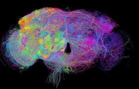 Учёные создали подробную карту мозга с указанием большинства нейронов