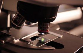 Ученые смогли перепрограммировать мозг