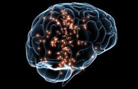 Творческим людям мешает зарабатывать особое устройство мозга