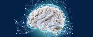 Какая часть нашего мозга самая магнитная?