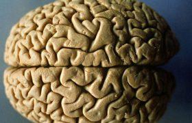 Мозг способен регенерировать даже в старости