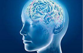 Ученые: мозг мужчины распознает движение быстрее женского