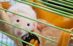 У людей и мышей нашли новый орган, защищающий от инфекций