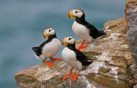 Ученые рассказали, от чего увеличился мозг островных птиц