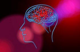 «Удивительный механизм»: в сети рассказали, как правильно тренировать мозг