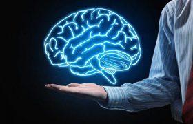 Можно ли жить без мозга