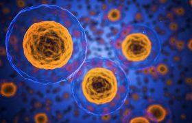 Учёные раскрыли секрет бессмертия мозга