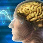 Учёные узнали как мозг меняет языковую раскладку