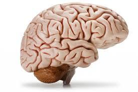 Три мозга в одной упряжке