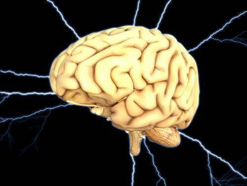 Изучение мозга живых людей объяснило развитие интеллекта — Нейробиологи