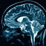 Специалисты научились обманывать человеческий мозг