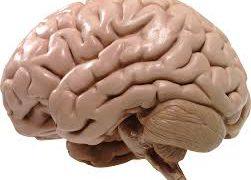 Одиночество вредит мозгу