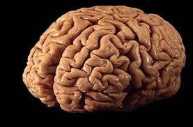 Выяснены подробности того, как мозг находит ошибки при согласовании слов