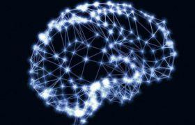 Нейробиологи обнаружили в головном мозге человека прежде неизвестный участок