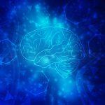 Внутри мозга живут бактерии и это нормально