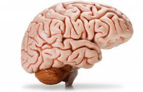 МРТ головного мозга с исследованием придаточных пазух носа