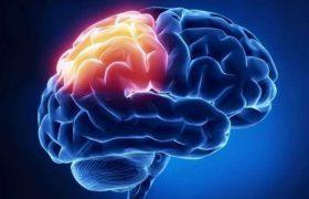 Открытие – психотерапия надолго меняет связи в мозге