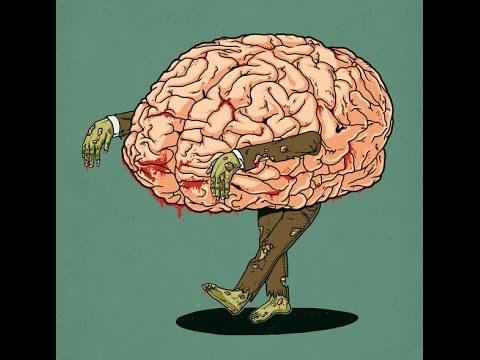 10 «возрастов» мозга