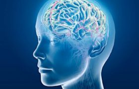 Пробиотические продукты способны вызывать проблемы с мозгом
