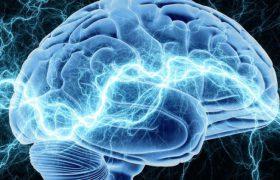 Раскрыты секреты запоминания и стирания информации в головном мозге