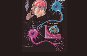 Отказ от курения начинается с мозга