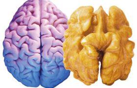 Пища для ума или питание для мозга