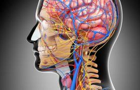 9 триггеров мигрени: Как избавиться от приступов головной боли