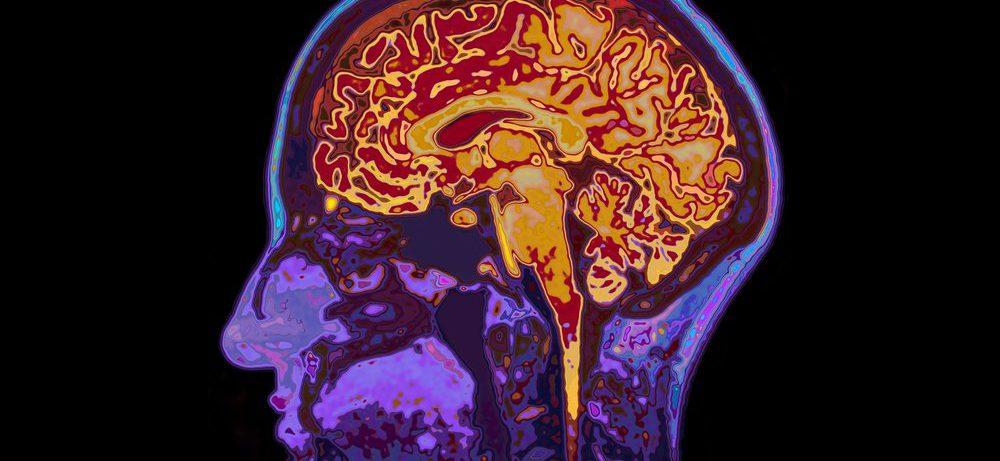 Память не зависит от размеров мозга