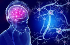 Открытие: головной мозг четко разделяет близких друзей и незнакомцев