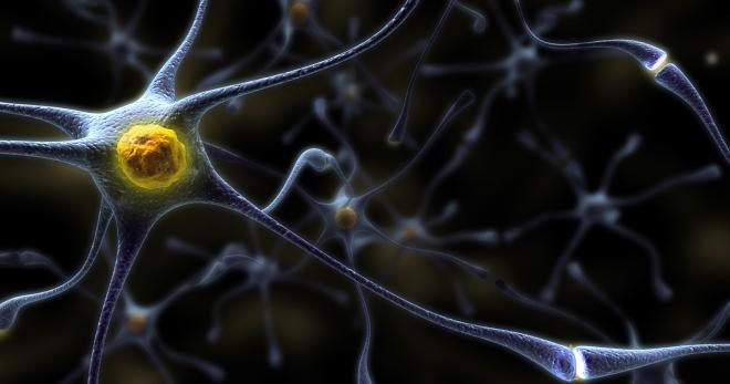 Нервная ткань – строение, виды и работа нейронов