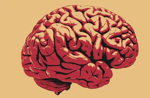 Как развивать память и мышление?