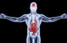 Ученые: мозг и желудок — одно целое