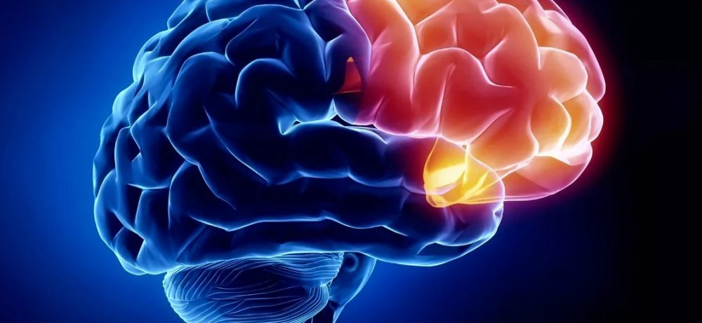 Еда и мозг: что углеводы делают с мышлением и памятью